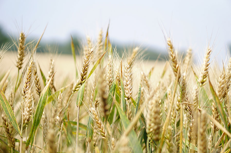1-Arable-Crops.jpg