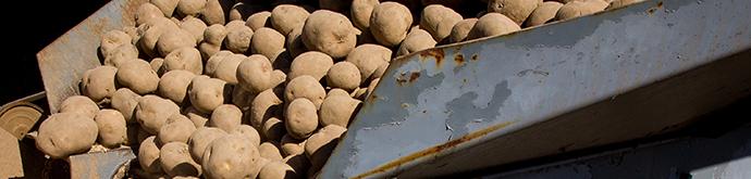 brown-potatoes-2255800.jpg