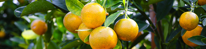 mandarin-fruit-2135677.jpg