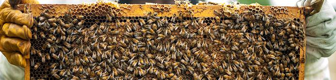 person-holding-honeybomb-with-honeybee-1406954.jpg