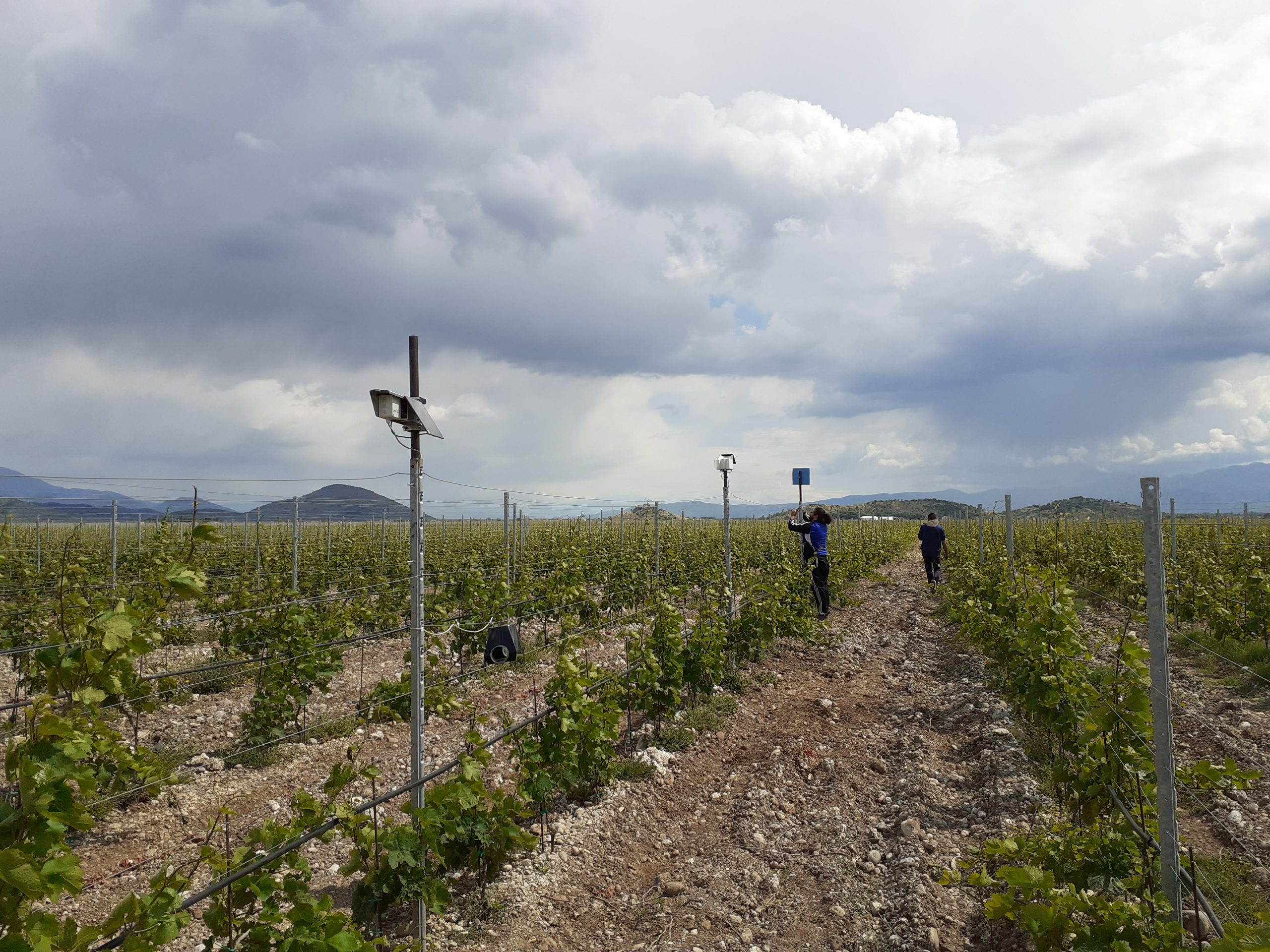 Sensors being deployed in vineyards