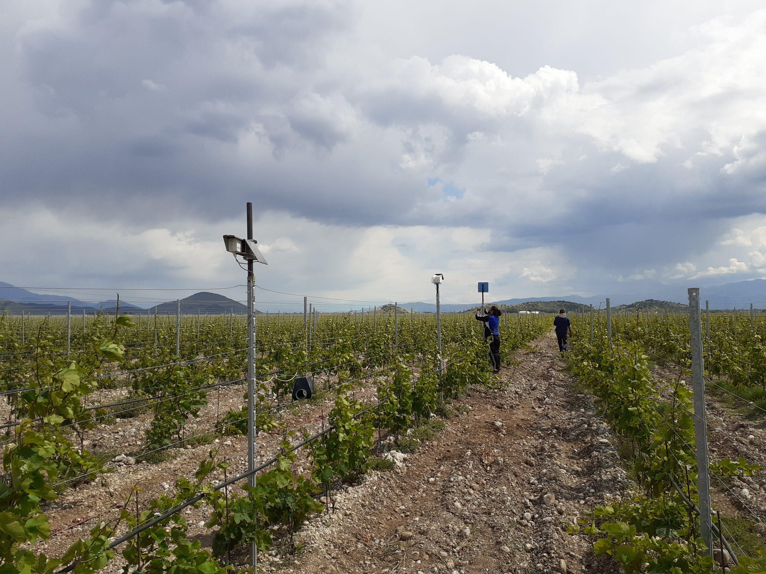 Sensors being deployed in vineyards