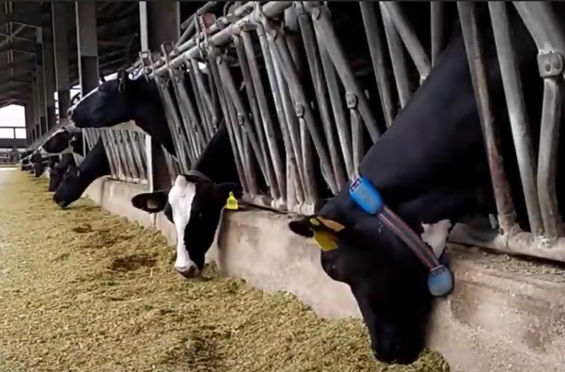 Pilot Video: Consumer Awareness- Milk Quality and Animal Welfare Tracking
